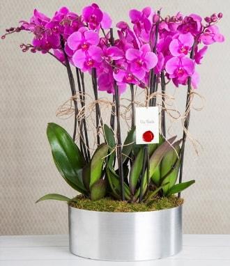 11 dallı mor orkide metal vazoda  Afyon çiçek gönderme sitemiz güvenlidir