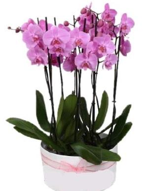 Beyaz seramik içerisinde 7 dallı mor orkide  Afyon çiçekçi telefonları