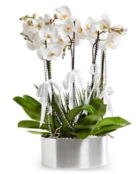 Beş dallı metal saksıda beyaz orkide  Afyon çiçek yolla
