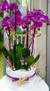 Seramik vazoda 4 dallı mor lila orkide  Afyon online çiçek gönderme sipariş