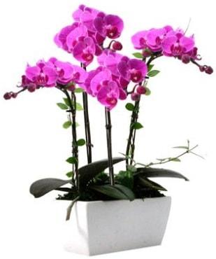 Seramik vazo içerisinde 4 dallı mor orkide  Afyon çiçek satışı
