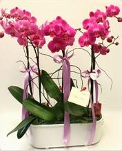 Beyaz seramik içerisinde 4 dallı orkide  Afyon ucuz çiçek gönder