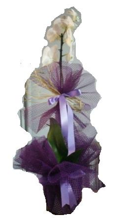 Tek dallı beyaz orkide süper kalite ithal  Afyon çiçek siparişi sitesi