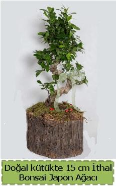 Doğal kütükte İthal bonsai japon ağacı  Afyon çiçek gönderme