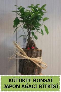 Kütük içerisinde doğal bonsai ağacı  Afyon çiçekçi telefonları