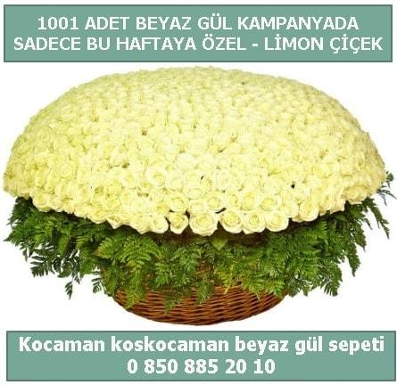1001 adet beyaz gül sepeti özel kampanyada  Afyon çiçek gönderme sitemiz güvenlidir