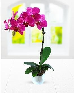 Tek dallı mor orkide  Afyon çiçek satışı