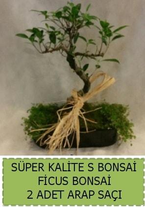 Ficus S Bonsai ve arap saçı  Afyon çiçekçi telefonları