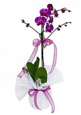 Tekli Mor Orkide  Afyon çiçek yolla