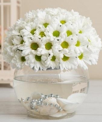 Fanusta beyaz Papatya  Afyon çiçek satışı