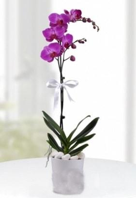 Tek dallı saksıda mor orkide çiçeği  Afyon çiçekçiler