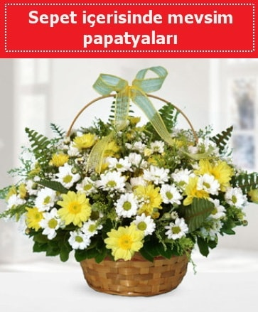 Sepet içerisinde mevsim papatyaları  Afyon ucuz çiçek gönder
