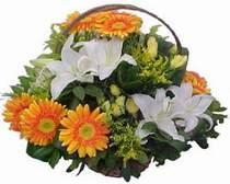 Afyon online çiçekçi , çiçek siparişi  sepet modeli Gerbera kazablanka sepet